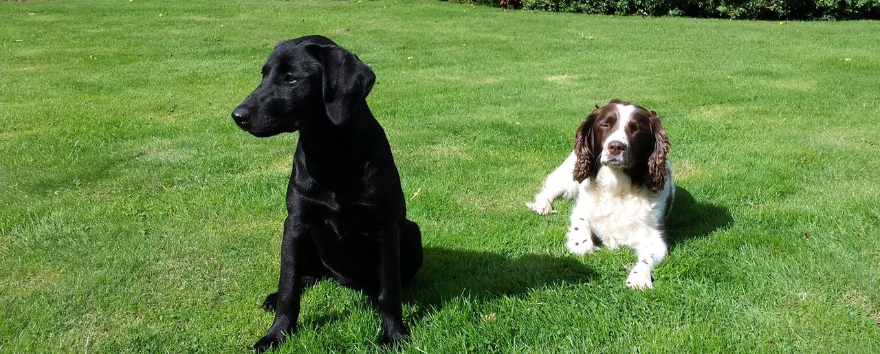 Take your dog on holiday to Elms Farm Cottages